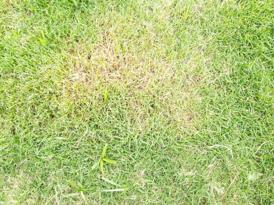 Avoid Fungal Growth Due To Lawn Overwatering