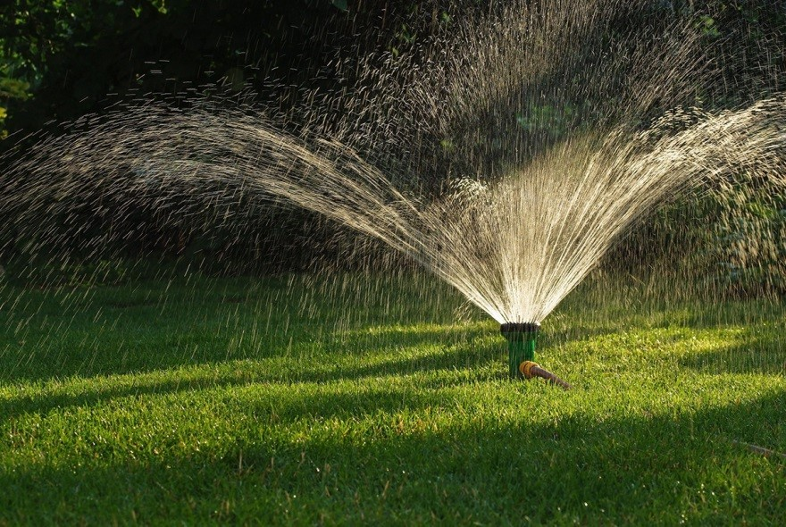 Overwatering Your Lawn Could Bring On Pests and Disease