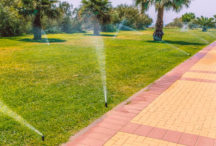 To winterize or not? This is a very tricky question if you live in Tampa Bay. We have already had a low temperature in past January 2018 of 29 degrees […]