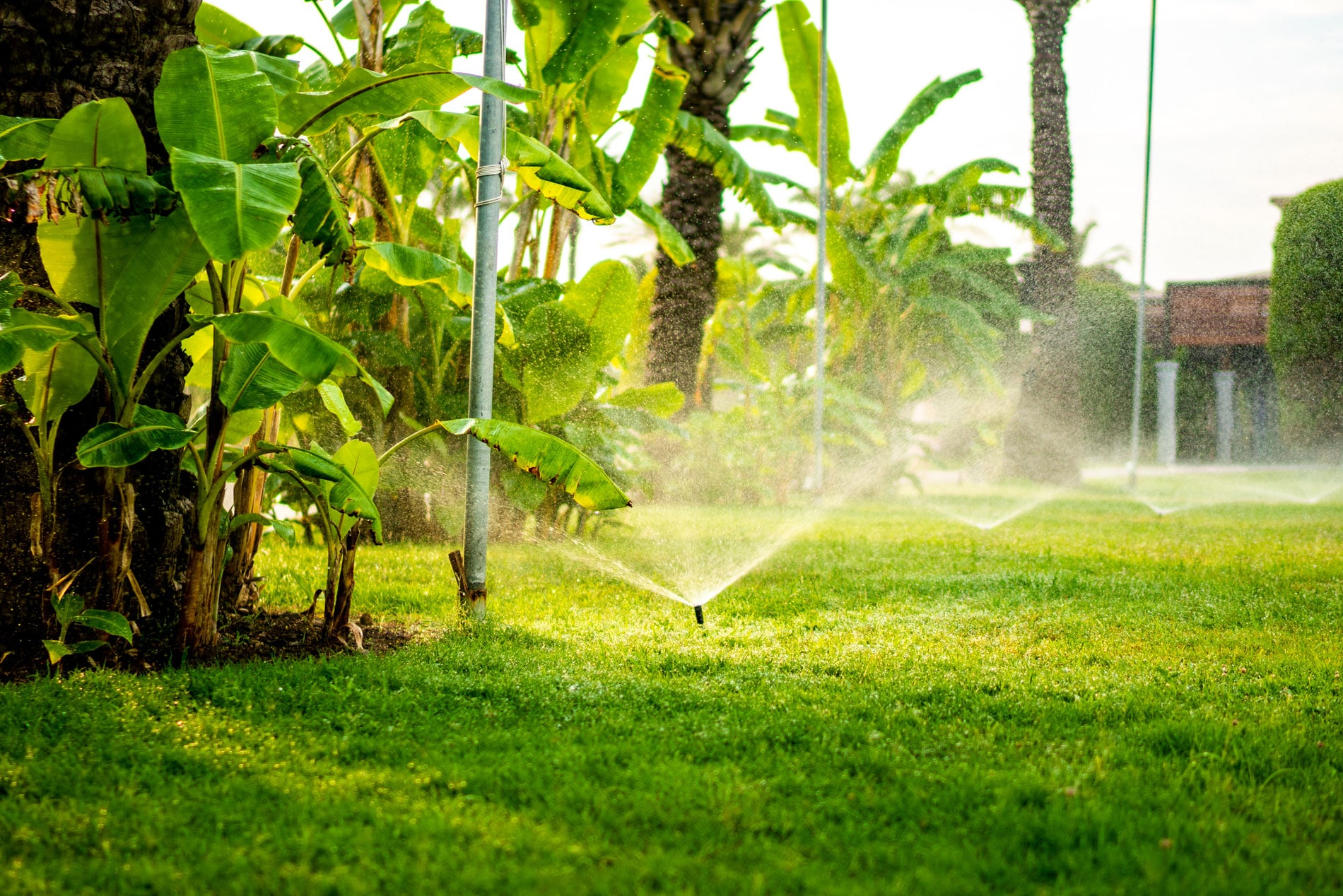 Water More With Reclaimed Water
